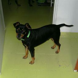 Vista previa mascota en adopción